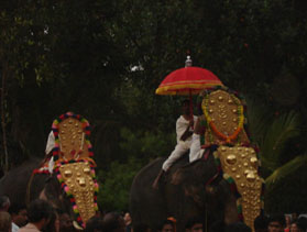Kerala, festa degli elefanti